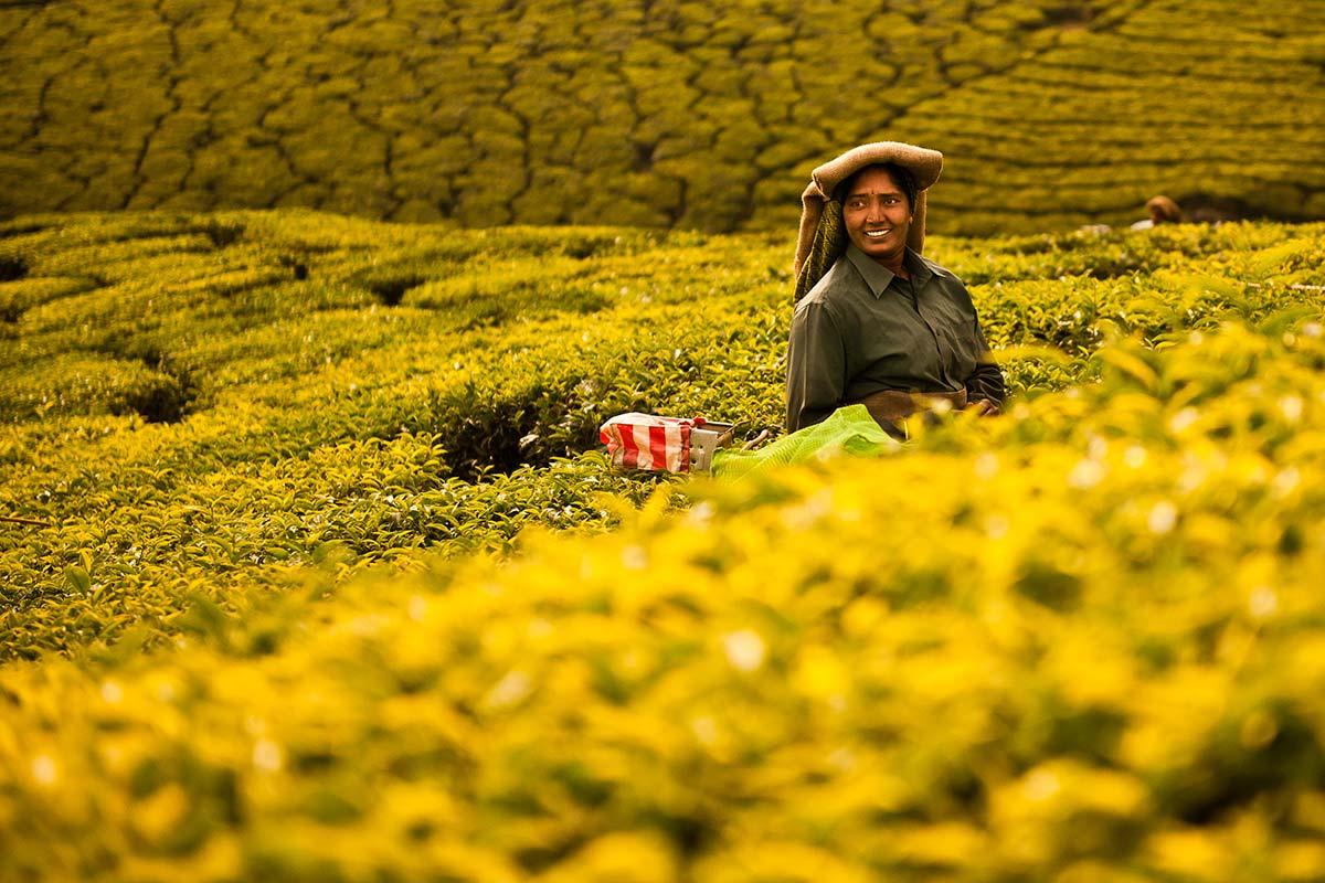 woman in tea plantations