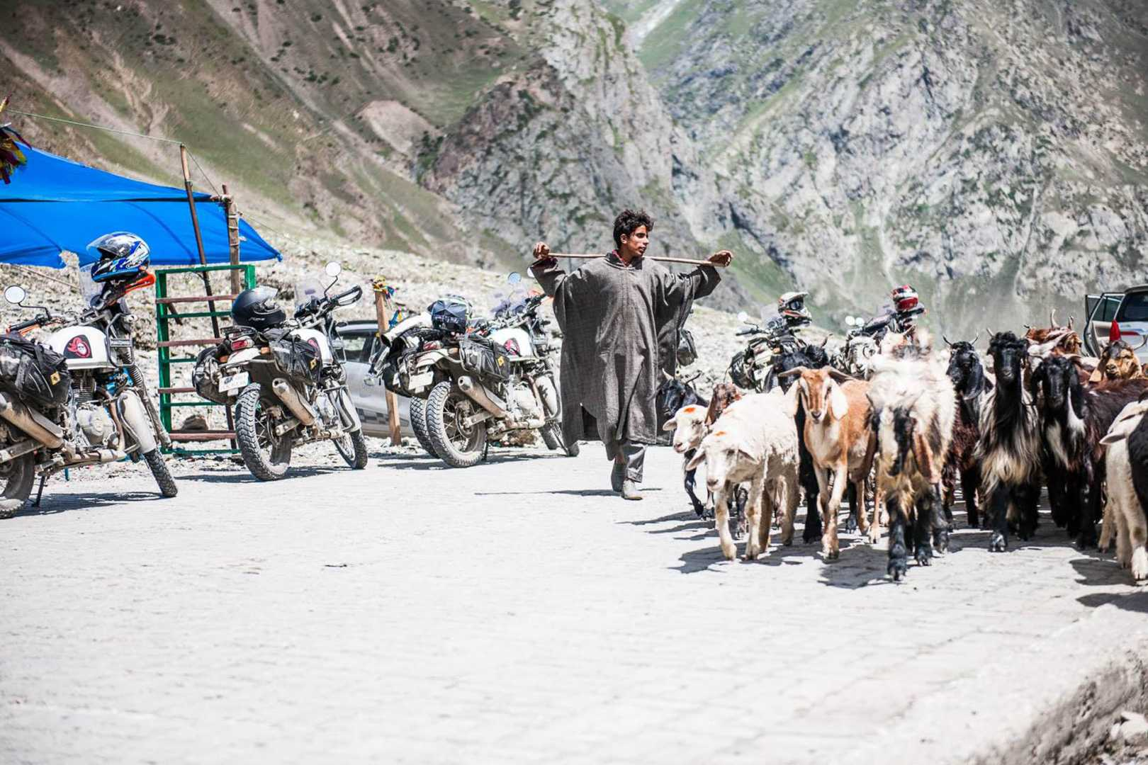 Himalayan mountain goats by motorcycles